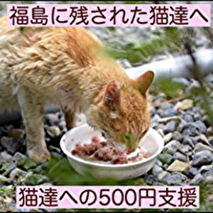 画像1: 福島の猫たちへ500円支援 (1)